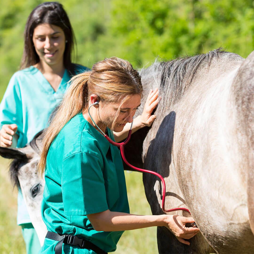 Veterinärmedizin & Animal Health Industrie