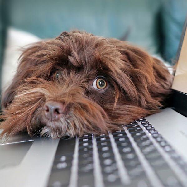 Hund Europäische Weiterbildung