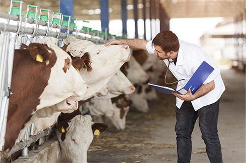Nachfolgeprogramm Landwirtschaft